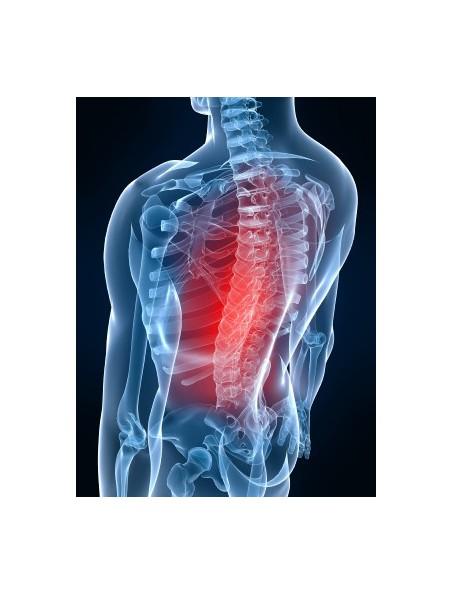 OsteoGEM GC13 Bio - Ostéoporose Bourgeons et jeunes pousses 15 ml - Herbalgem