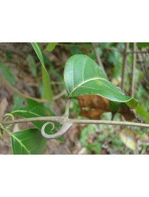 https://www.louis-herboristerie.com/7552-home_default/griffe-de-chat-teinture-mre-50-ml-biover.jpg