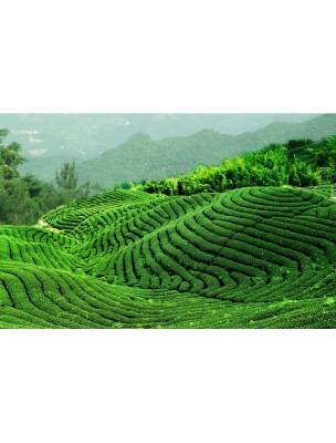 https://www.louis-herboristerie.com/7621-home_default/vert-de-chine-sencha-the-plaisir-100g.jpg