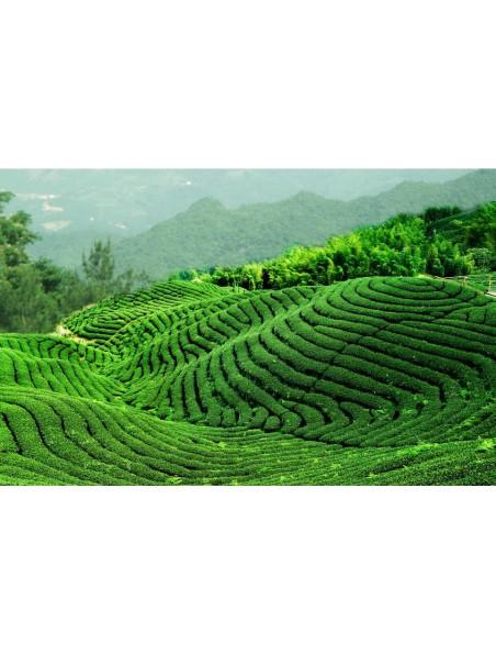 Vert de Chine sencha - Feuilles plates typiques - 100g