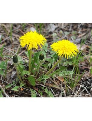 https://www.louis-herboristerie.com/7700-home_default/pissenlit-bio-racine-coupee-100g-tisane-de-taraxacum-officinale.jpg
