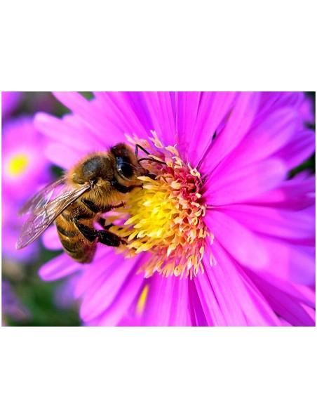 Shampoing Douceur de miel - 30% de miel Grand Cru 250 ml - Ballot-Flurin