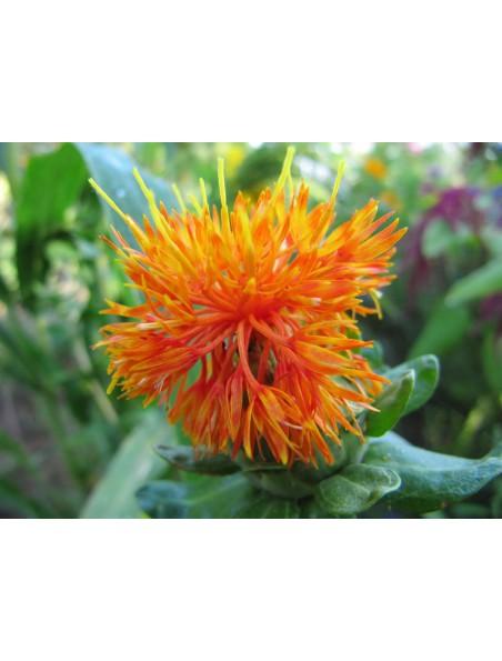 Carthame Bio - Huile végétale de Carthumus tinctorius 100 ml - Abiessence