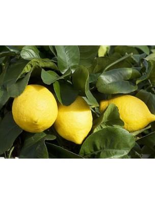 https://www.louis-herboristerie.com/7982-home_default/citronnier-bourgeon-bio-15-ml-herbalgem.jpg