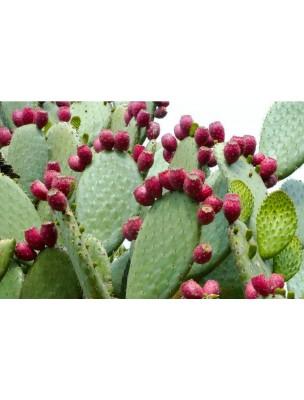 https://www.louis-herboristerie.com/8017-home_default/nopal-bio-minceur-et-transit-120-gelules-purasana.jpg