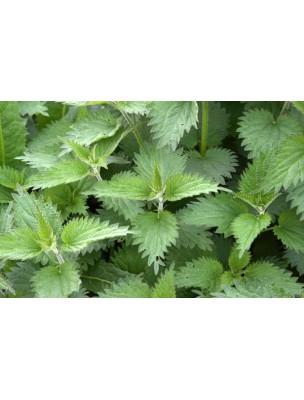https://www.louis-herboristerie.com/8059-home_default/ortie-racine-bio-confort-masculin-120-gelules-purasana.jpg