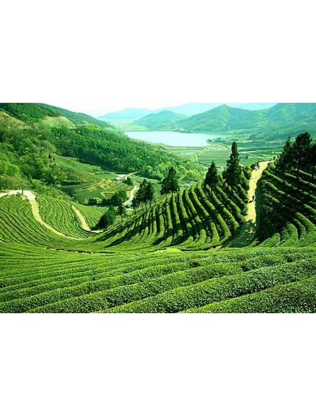 Darjeeling FTGFOP Bio - Thé Bio des grands jardins de Darjeeling 100g - L'Autre thé