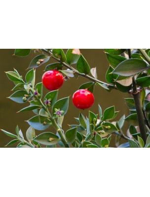 https://www.louis-herboristerie.com/8186-home_default/petit-houx-bio-circulation-120-gelules-ruscus-aculeatus-purasana.jpg