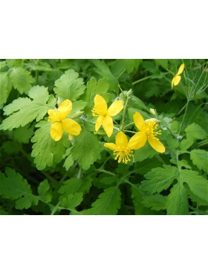 https://www.louis-herboristerie.com/8191-home_default/chelidoine-bio-verrues-teinture-mere-50-ml-ladrome.jpg