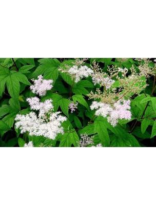 https://www.louis-herboristerie.com/8277-home_default/reine-des-prs-bio-glules-purasana.jpg