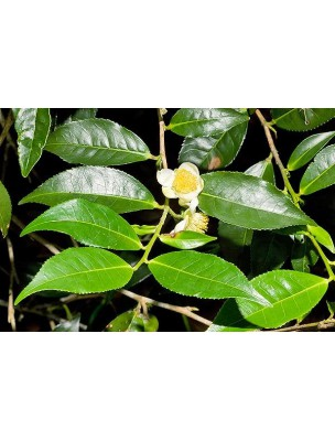 https://www.louis-herboristerie.com/8284-home_default/the-vert-bio-minceur-120-gelules-purasana.jpg