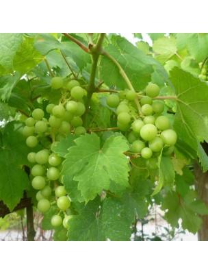 https://www.louis-herboristerie.com/8297-home_default/vigne-rouge-bio-circulation-120-gelules-purasana.jpg