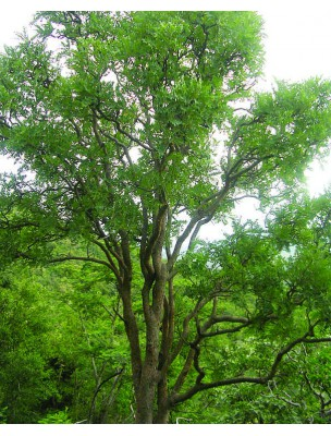 https://www.louis-herboristerie.com/8341-home_default/boswellia-encens-oliban-glules-purasana.jpg