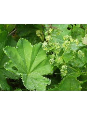 https://www.louis-herboristerie.com/8387-home_default/alchmille-bio-teinture-mre-50-ml-biover.jpg