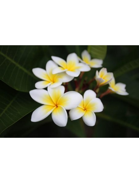 Monoï de Tahiti - Appellation d'Origine 150 ml - Naturado
