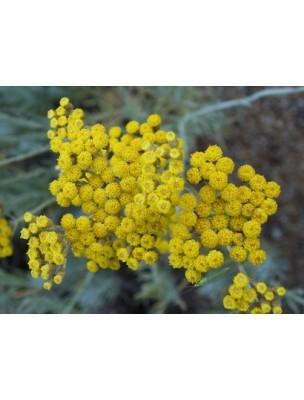 https://www.louis-herboristerie.com/8766-home_default/helichryse-immortelle-bio-hydrolat-eau-florale-200-ml-abiessence.jpg
