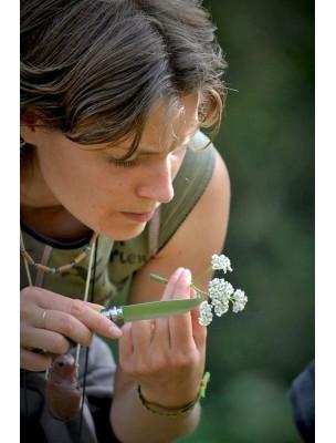 https://www.louis-herboristerie.com/8786-home_default/slow-cosmetique-le-guide-visuel-26-recettes-slow-190-pages-julien-kaibeck-melanie-dupuis.jpg
