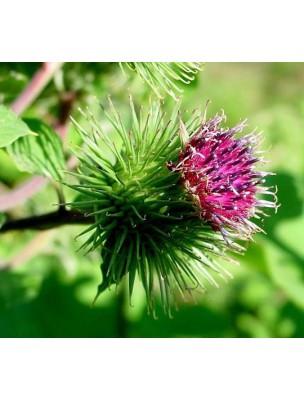 https://www.louis-herboristerie.com/8820-home_default/bardane-bio-racine-coupee-100g-tisane-arctium-lappa-l.jpg