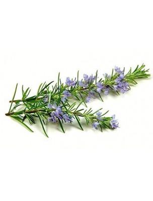 https://www.louis-herboristerie.com/8832-home_default/romarin-bio-100g.jpg