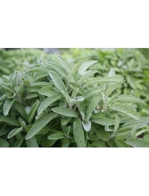 https://www.louis-herboristerie.com/8836-home_default/sauge-bio-feuilles-brisures-100g-tisane-de-salvia-officinalis-l.jpg