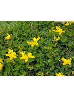 https://www.louis-herboristerie.com/8846-home_default/lotier-cornicule-bio-partie-aerienne-coupee-100g-tisane-de-lotus-corniculatus-l.jpg