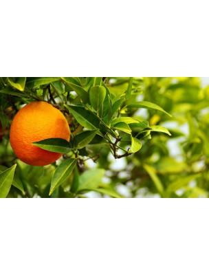https://www.louis-herboristerie.com/8898-home_default/orange-amere-bigaradier-bio-ecorce-100g-citrus-aurantium-l.jpg