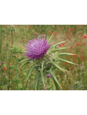 https://www.louis-herboristerie.com/8919-home_default/chardon-marie-bio-fruit-100g-tisane-de-silybum-marianum-l.jpg