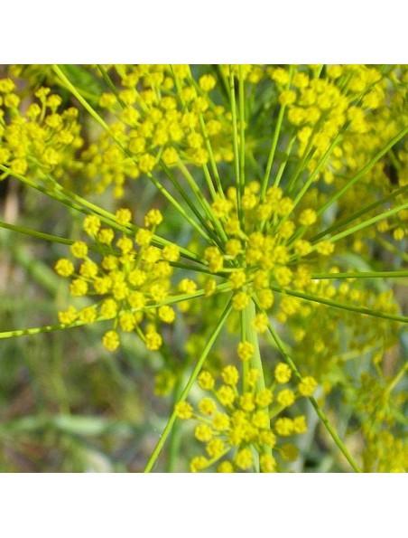 Aneth Bio - Hydrolat (eau florale) 200 ml - Abiessence