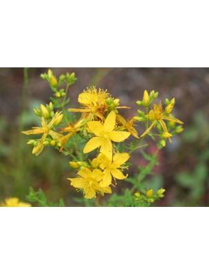 https://www.louis-herboristerie.com/8965-home_default/millepertuis-bio-hydrolat-eau-florale-200-ml-abiessence.jpg