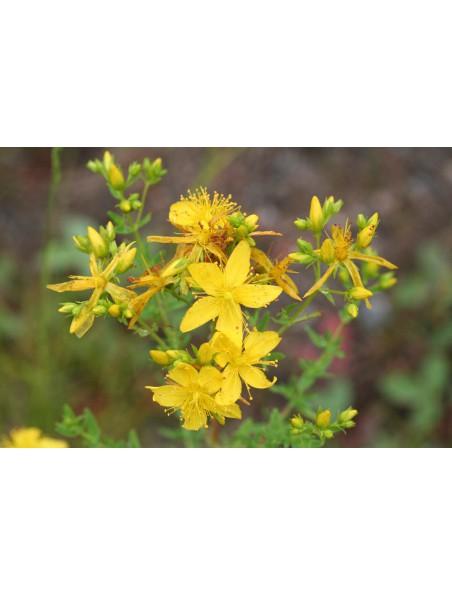 Millepertuis Bio - Hydrolat (eau florale) 200 ml - Abiessence