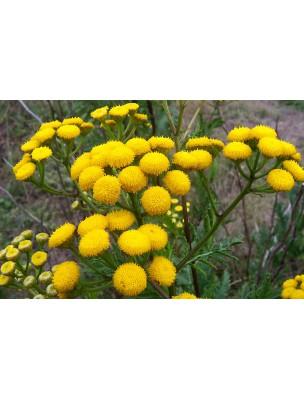 https://www.louis-herboristerie.com/8971-home_default/tanaisie-bio-hydrolat-eau-florale-200-ml-abiessence.jpg
