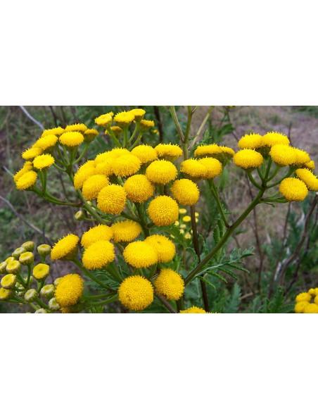 Tanaisie Bio - Hydrolat (eau florale) 200 ml - Abiessence