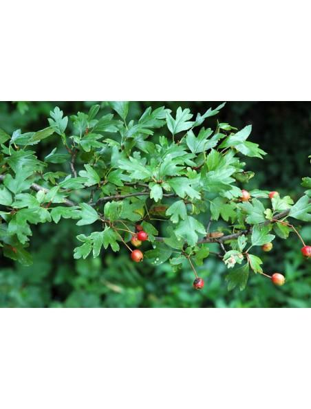 Aubépine Bio - Hydrolat (eau florale) 200 ml - Abiessence