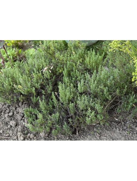 Thym thuyanol Bio - Hydrolat (eau florale) 200 ml - Abiessence