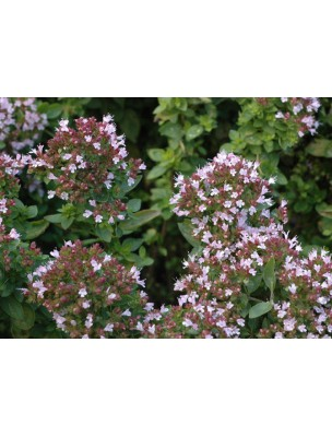 https://www.louis-herboristerie.com/9035-home_default/origan-bio-hydrolat-eau-florale-200-ml-abiessence.jpg