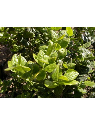 https://www.louis-herboristerie.com/9498-home_default/boldo-bio-teinture-mre-50-ml-biover.jpg