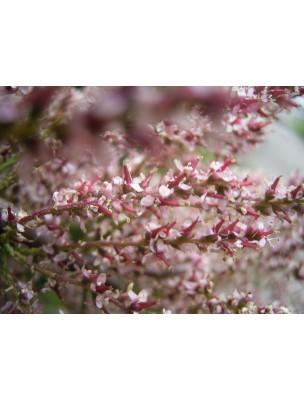 https://www.louis-herboristerie.com/9526-home_default/tamaris-bourgeon-bio-fer-et-plaquettes-15-ml-herbalgem.jpg