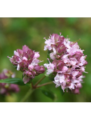 https://www.louis-herboristerie.com/9549-home_default/marjolaine-bio-feuilles-100g-tisane-d-origanum-majorana-l.jpg