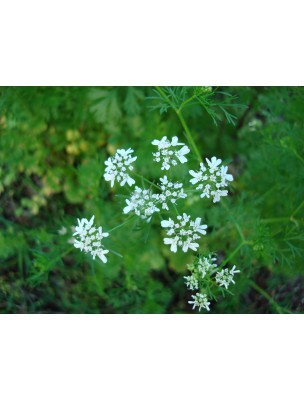 https://www.louis-herboristerie.com/9569-home_default/coriandre-france-bio-fruit-100g-tisane-coriandrum-sativum-l.jpg