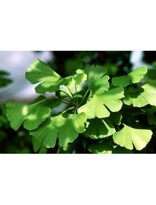 https://www.louis-herboristerie.com/9587-home_default/ginkgo-bio-teinture-mre-50-ml-biover.jpg