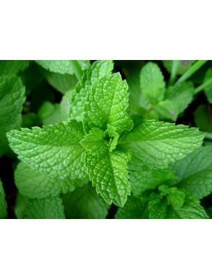 https://www.louis-herboristerie.com/9632-home_default/menthe-poivree-bio-feuilles-brisures-100g-tisane-de-mentha-piperita-l.jpg