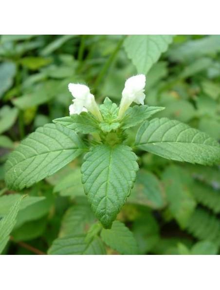 Lamier blanc (Ortie blanche) Bio - Sommités fleuries et feuilles 100g - Tisane de Lamium album L.
