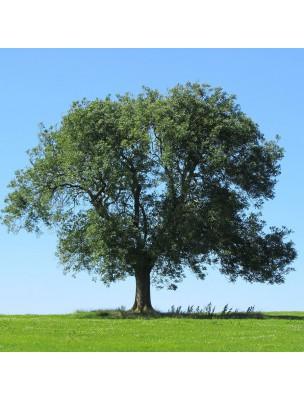 https://www.louis-herboristerie.com/9645-home_default/frene-bio-feuilles-coupees-100g-tisane-de-fraxinus-excelsior-l.jpg