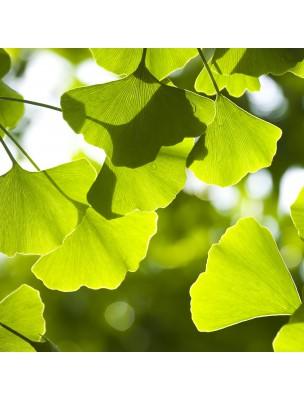 https://www.louis-herboristerie.com/9650-home_default/ginkgo-bio-feuilles-coupees-100g-tisane-de-ginkgo-biloba-l.jpg