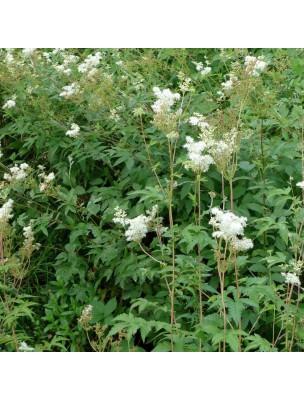 https://www.louis-herboristerie.com/9754-home_default/reine-des-prs-fleur-bio-100g.jpg