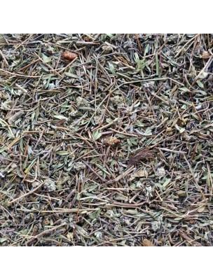 Serpolet Bio - Sommité fleurie coupée 50g - Thymus serpyllum L.
