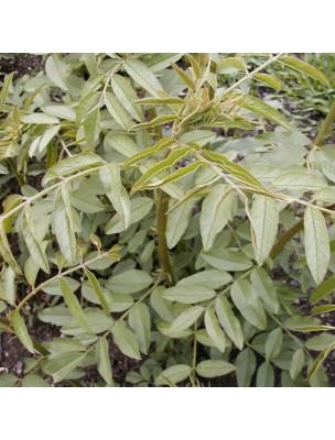 https://www.louis-herboristerie.com/9761-home_default/rglisse-bio-100g.jpg