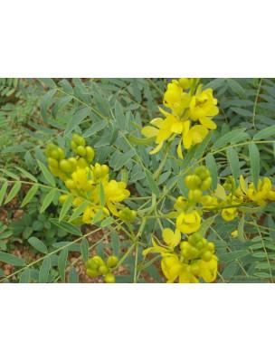 https://www.louis-herboristerie.com/9769-home_default/sene-bio-feuilles-coupees-100g-tisane-de-senna-alexandrina-mill.jpg