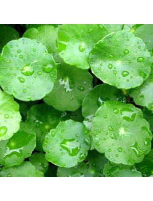 https://www.louis-herboristerie.com/9801-home_default/centella-asiatica-circulation-et-cellulite-100-gelules-vegetales-solgar.jpg