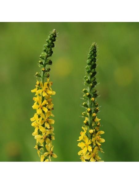 Aigremoine - Sommité fleurie 100g - Tisane Agrimonia eupatoria L.